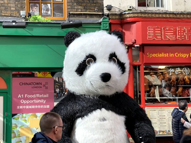Yeah, we have real ones in Edinburgh (large panda toy)