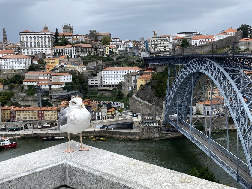 A seagull competes with the cityscape for my attention, in this view from the Gaia side