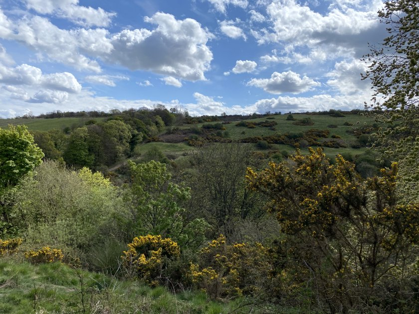 Looking across to the nearby Braid Hills